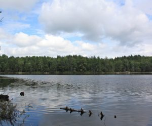Gile State Forest, Butterfield Pond