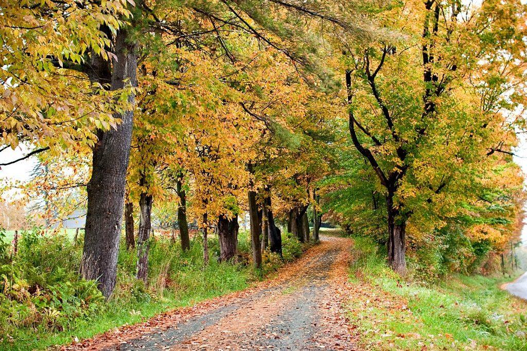 Rural Norwich, Vermont